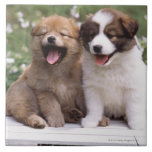 Two puppies sitting together tiles