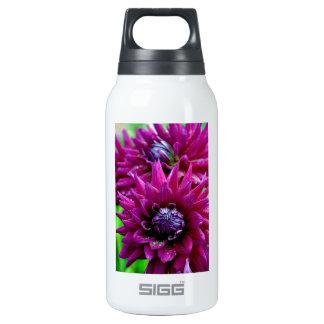 Two purple dahlias flowers in bloom insulated water bottle