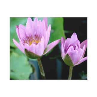 two purple water lilies canvas print