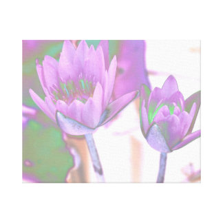 two purple water lilies invert solarized canvas print