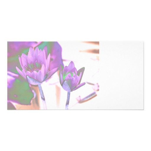 two purple water lilies invert solarized photo card template