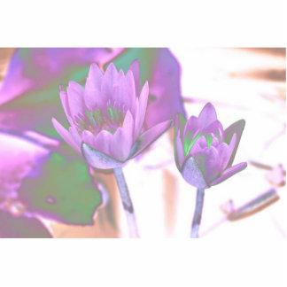 two purple water lilies invert solarized acrylic cut outs