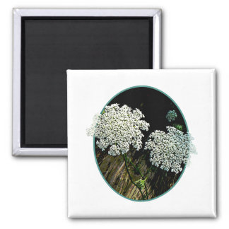 Two Queen Anne s Lace Magnet