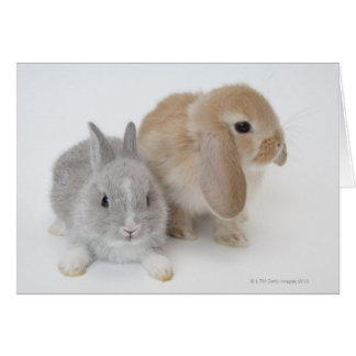 Two rabbits.Netherland Dwarf and Holland Lop. Card