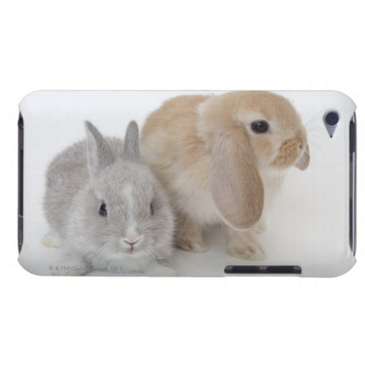 Two rabbits.Netherland Dwarf and Holland Lop. iPod Case-Mate Case