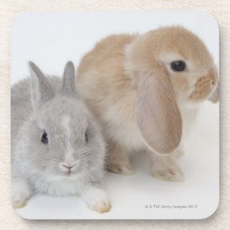 Two rabbits.Netherland Dwarf and Holland Lop. Drink Coaster
