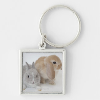 Two rabbits.Netherland Dwarf and Holland Lop. Keychain