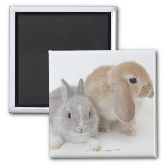 Two rabbits.Netherland Dwarf and Holland Lop. Magnet