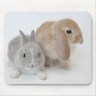 Two rabbits.Netherland Dwarf and Holland Lop. Mouse Pad