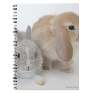 Two rabbits.Netherland Dwarf and Holland Lop. Spiral Notebook