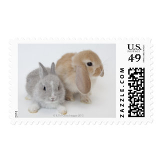 Two rabbits.Netherland Dwarf and Holland Lop. Postage Stamp
