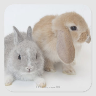 Two rabbits.Netherland Dwarf and Holland Lop. Square Sticker