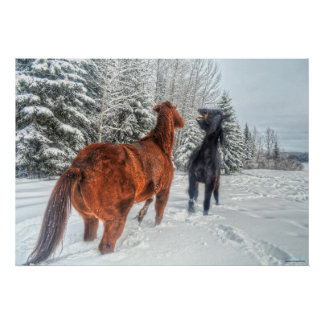 Two Ranch Horses Playfighting in Winter Snow III Poster