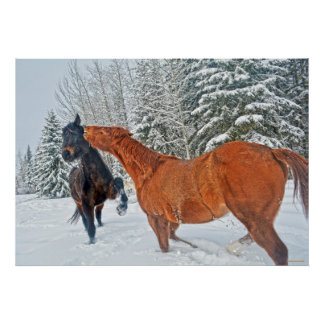 Two Ranch Horses Playfighting in Winter Snows Poster
