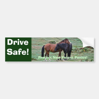 Two Rare, Wild New Forest Pony Friends in England Bumper Sticker