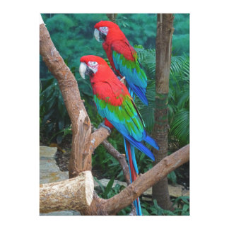 Two Red and Green Winged Macaws Ara Chloropterus Canvas Print