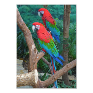 Two Red and Green Winged Macaws Ara Chloropterus Card
