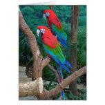 Two Red and Green Winged Macaws Ara Chloropterus Greeting Card