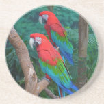 Two Red and Green Winged Macaws Ara Chloropterus Beverage Coaster