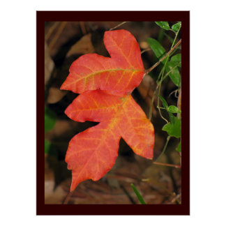 Two Red Autumn Leaves Poster