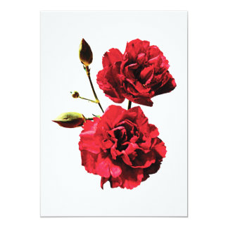 Two Red Carnations with Buds Card