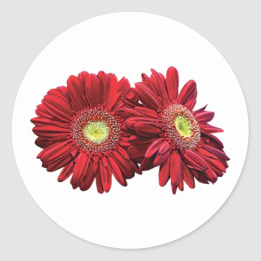 Two Red Daisies Round Stickers