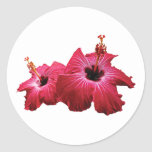 Two Red Hibiscus Classic Round Sticker