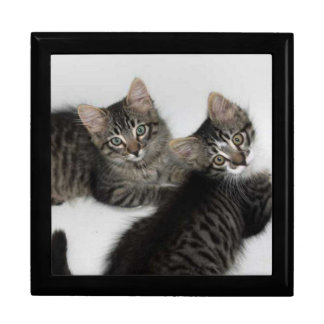 Two Rescued Kittens Jewelry Box