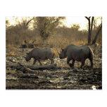 Two rhinos postcard