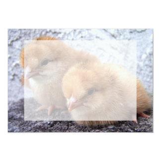"two rhode island red chicks photo 5"" x 7"" invitation card"
