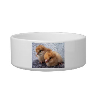 two rhode island red chicks photo pet water bowl
