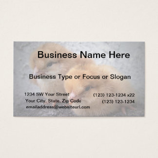 two rhode island red chicks photo vignette business card