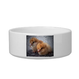 two rhode island red chicks photo vignette cat water bowls