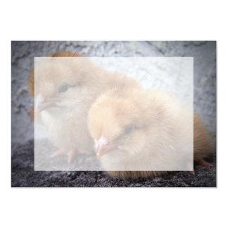 "two rhode island red chicks photo vignette 5"" x 7"" invitation card"