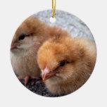 two rhode island red chicks photo vignette christmas ornament
