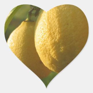 Two ripe lemons hanging on tree heart sticker