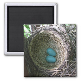 Two Robin's Eggs in Nest 2 Inch Square Magnet