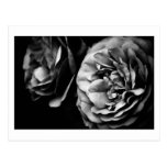 two roses postcard