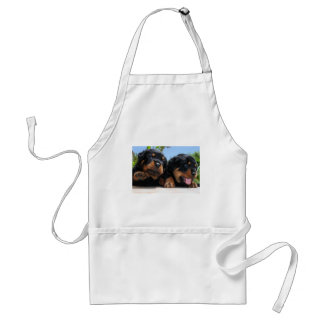 Two Rottweiler Puppies On A Step Aprons