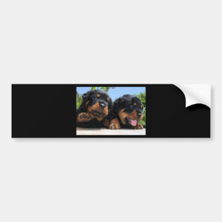 Two Rottweiler Puppies On A Step Bumper Sticker