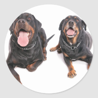 two rottweilers,