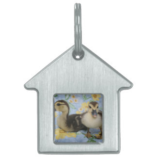 two rouen ducklings against flowered background pet ID tag