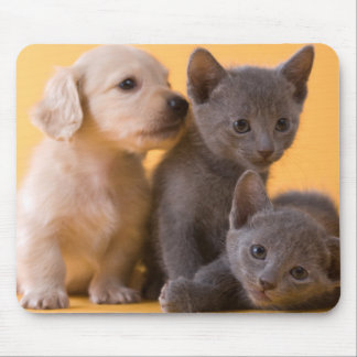 Two Russian Blue Kittens And Two Dachshund Puppies Mouse Pad