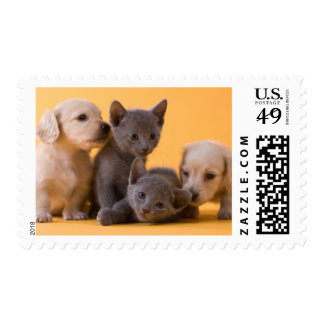 Two Russian Blue Kittens And Two Dachshund Puppies Postage