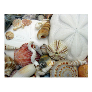 Two Sand Dollars Blank Postcard