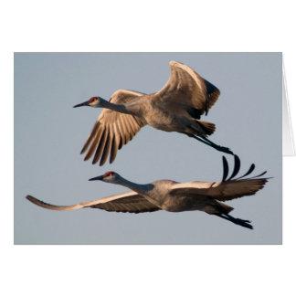 Two Sandhill Cranes in Flight over Bosque Card