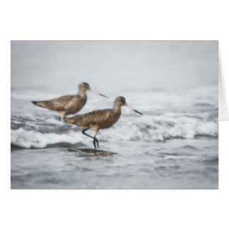 Two Sandpipers Greeting Cards