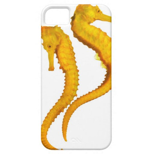 Two Sea Horses shoot on a white background in a iPhone 5 Cover