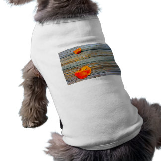 two seagrape leaves wooden dock sat dog shirt