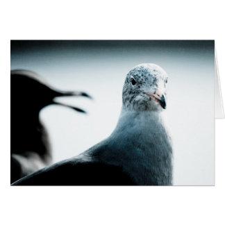 Two Seagulls Greeting Card